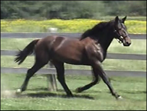 2014 Yearling Videos Online